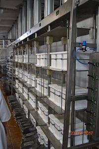 Стало после модернизации сырного цеха, пластиковые формы