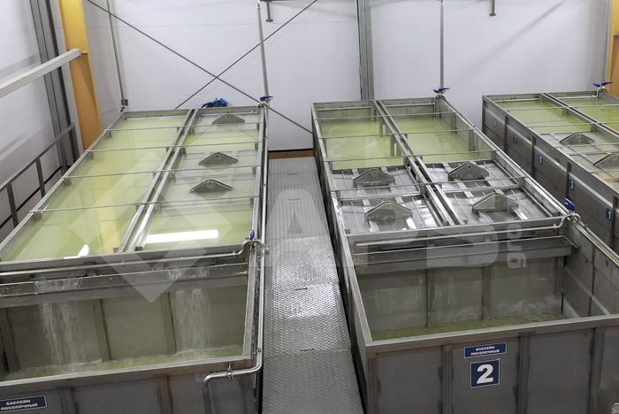 Солильный бассейн на сыродельном производстве