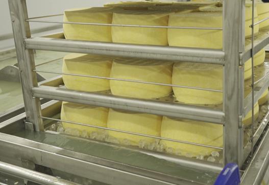 Завод по производству сыра на 100 тонн переработки молока